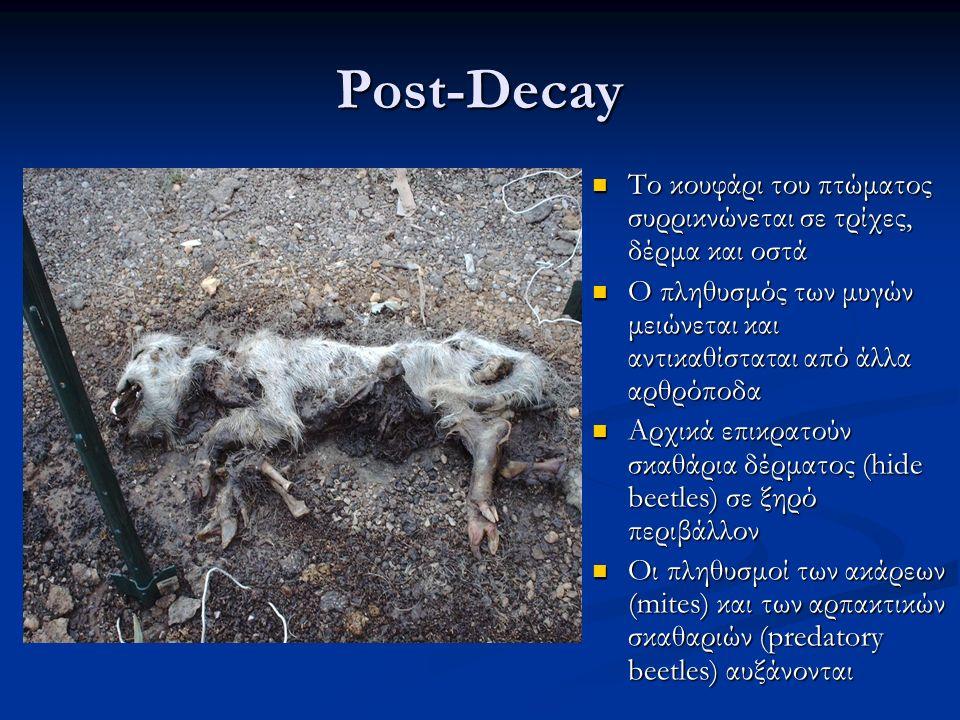 Post-Decay Το κουφάρι του πτώματος συρρικνώνεται σε τρίχες, δέρμα και οστά Το κουφάρι του πτώματος συρρικνώνεται σε τρίχες, δέρμα και οστά Ο πληθυσμός των μυγών μειώνεται και αντικαθίσταται από άλλα αρθρόποδα Ο πληθυσμός των μυγών μειώνεται και αντικαθίσταται από άλλα αρθρόποδα Αρχικά επικρατούν σκαθάρια δέρματος (hide beetles) σε ξηρό περιβάλλον Αρχικά επικρατούν σκαθάρια δέρματος (hide beetles) σε ξηρό περιβάλλον Οι πληθυσμοί των ακάρεων (mites) και των αρπακτικών σκαθαριών (predatory beetles) αυξάνονται Οι πληθυσμοί των ακάρεων (mites) και των αρπακτικών σκαθαριών (predatory beetles) αυξάνονται