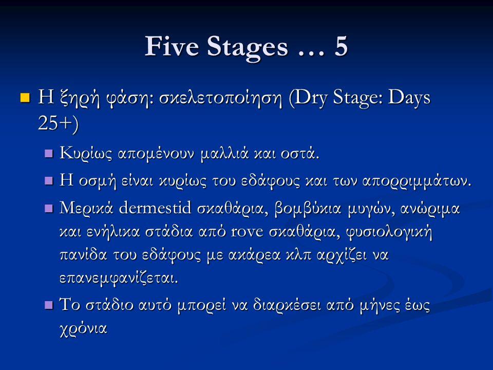 Five Stages … 5 Η ξηρή φάση: σκελετοποίηση (Dry Stage: Days 25+) Η ξηρή φάση: σκελετοποίηση (Dry Stage: Days 25+) Κυρίως απομένουν μαλλιά και οστά.