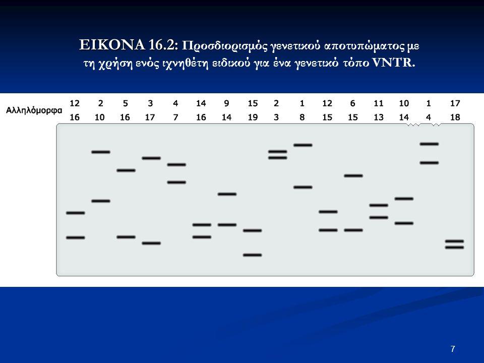 7 ΕΙΚΟΝΑ 16.2: ΕΙΚΟΝΑ 16.2: Προσδιορισμός γενετικού αποτυπώματος με τη χρήση ενός ιχνηθέτη ειδικού για ένα γενετικό τόπο VNTR.