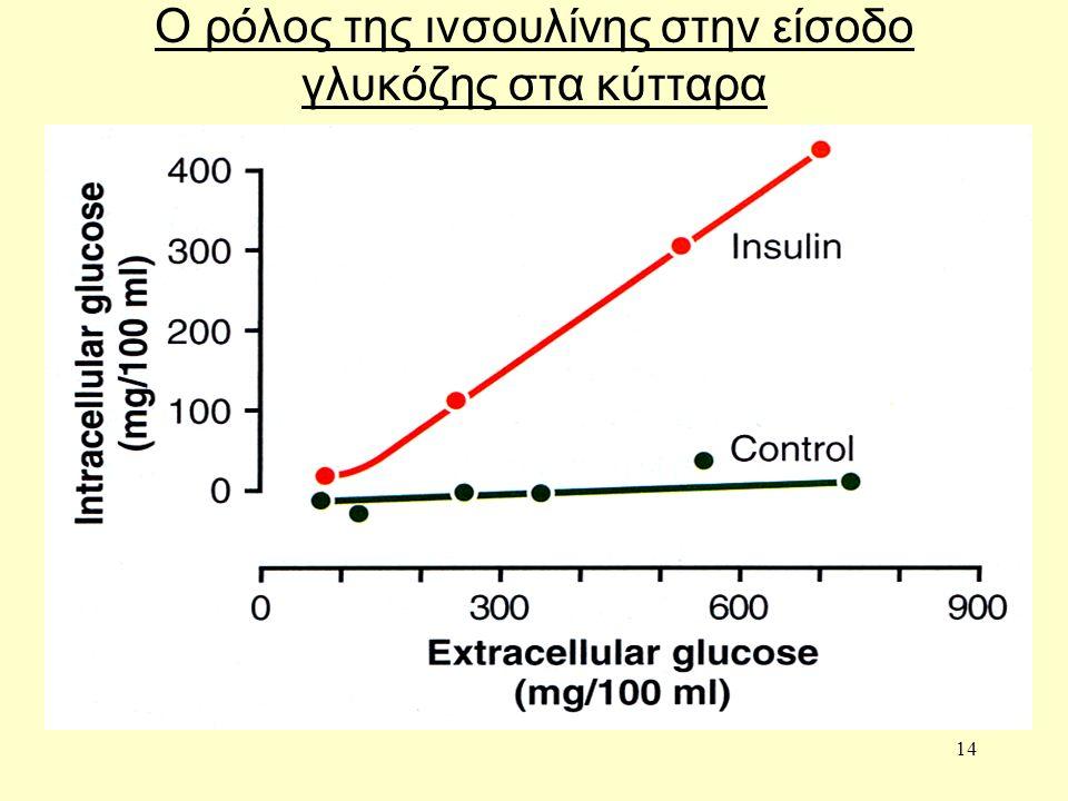 14 Ο ρόλος της ινσουλίνης στην είσοδο γλυκόζης στα κύτταρα