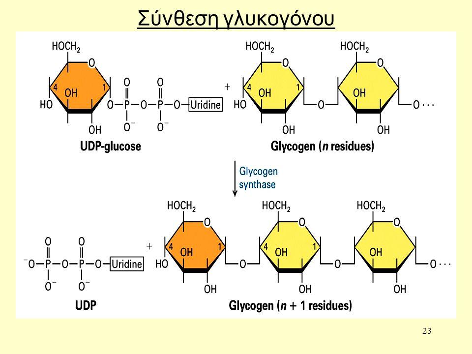 23 Σύνθεση γλυκογόνου