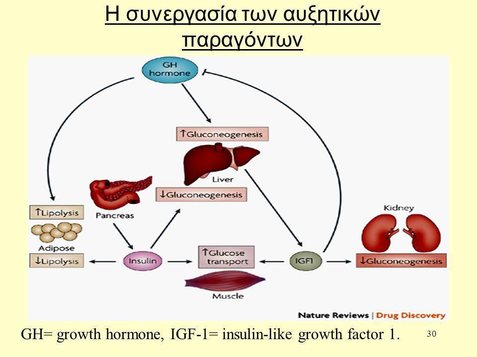 30 Η συνεργασία των αυξητικών παραγόντων GH= growth hormone, IGF-1= insulin-like growth factor 1.
