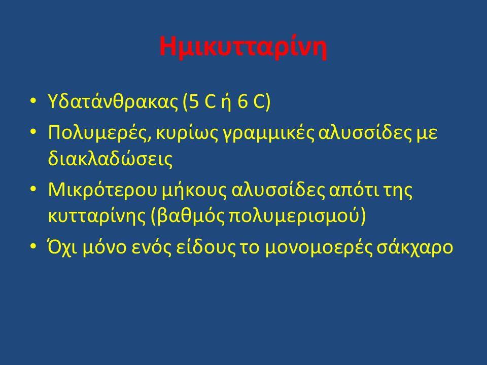 Ημικυτταρίνη Υδατάνθρακας (5 C ή 6 C) Πολυμερές, κυρίως γραμμικές αλυσσίδες με διακλαδώσεις Μικρότερου μήκους αλυσσίδες απότι της κυτταρίνης (βαθμός πολυμερισμού) Όχι μόνο ενός είδους το μονομοερές σάκχαρο