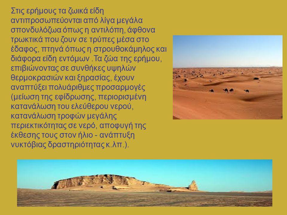 Στις ερήμους τα ζωικά είδη αντιπροσωπεύονται από λίγα μεγάλα σπονδυλόζωα όπως η αντιλόπη, άφθονα τρωκτικά που ζουν σε τρύπες μέσα στο έδαφος, πτηνά όπ