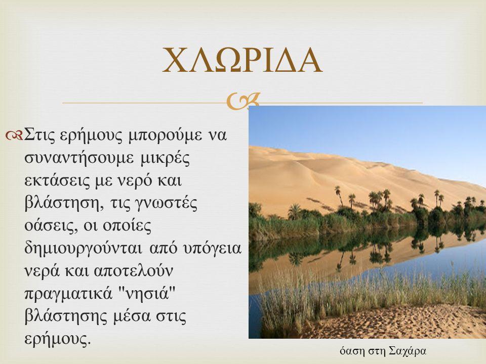   Στις ερήμους μπορούμε να συναντήσουμε μικρές εκτάσεις με νερό και βλάστηση, τις γνωστές οάσεις, οι οποίες δημιουργούνται από υπόγεια νερά και αποτελούν πραγματικά νησιά βλάστησης μέσα στις ερήμους.