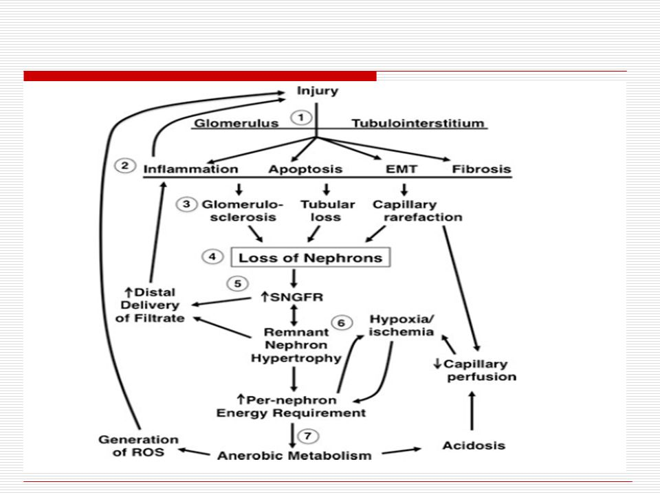 RENIN… 1.Increasing peripheral vasoconstriction 2.Stimulating Aldosterone secretion Aldosterone promotes the reabsorption of sodium and water to correct the fluid deficit and/or inadequate blood flow (renal ischemia)