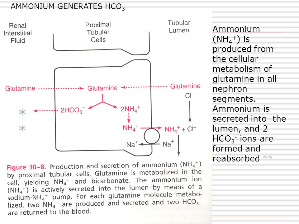 AMMONIUM GENERATES HCO 3 - Ammonium (NH 4 + ) is produced from the cellular metabolism of glutamine in all nephron segments.
