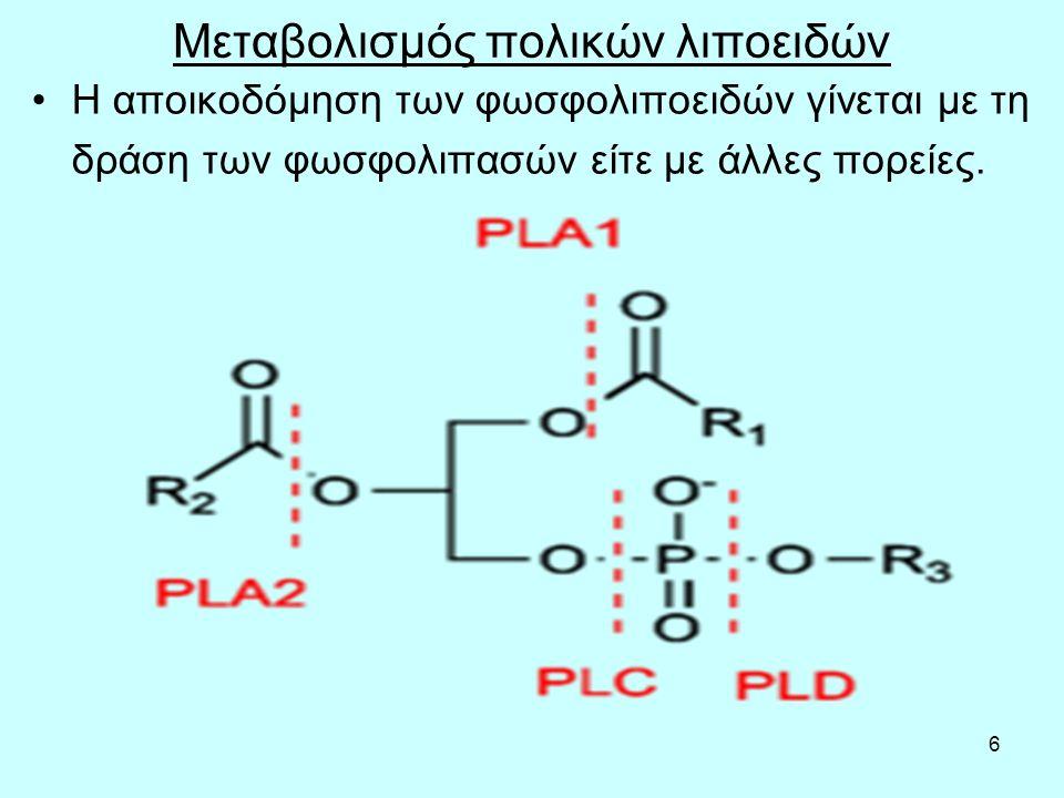 47 Φιμπράτες: αυξάνουν το καταβολισμό των LDL Οι φιμπράτες ενεργοποιούν τους PPAR (peroxisome proliferator- activated receptors), ιδίως τους PPARα, μία τάξη ενδοκυτταρικών υποδοχέων που τροποποιούν και διευκολύνουν το μεταβολισμό του λίπους (π.χ.