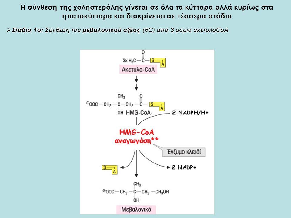Η σύνθεση της χοληστερόλης γίνεται σε όλα τα κύτταρα αλλά κυρίως στα ηπατοκύτταρα και διακρίνεται σε τέσσερα στάδια  Στάδιο 1ο: Σύνθεση του μεβαλονικού αξέος (6C) από 3 μόρια ακετυλοCoA