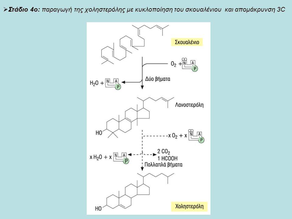  Στάδιο 4ο: παραγωγή της χοληστερόλης με κυκλοποίηση του σκουαλένιου και απομάκρυνση 3C