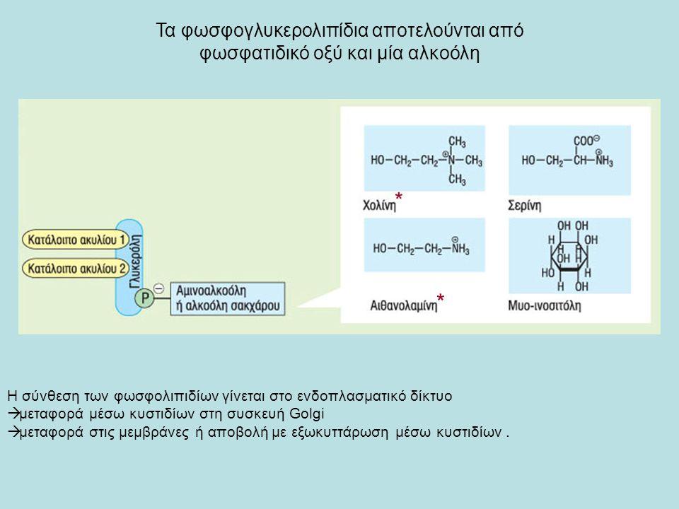 Τα φωσφογλυκερολιπίδια αποτελούνται από φωσφατιδικό οξύ και μία αλκοόλη Η σύνθεση των φωσφολιπιδίων γίνεται στο ενδοπλασματικό δίκτυο  μεταφορά μέσω κυστιδίων στη συσκευή Golgi  μεταφορά στις μεμβράνες ή αποβολή με εξωκυττάρωση μέσω κυστιδίων.