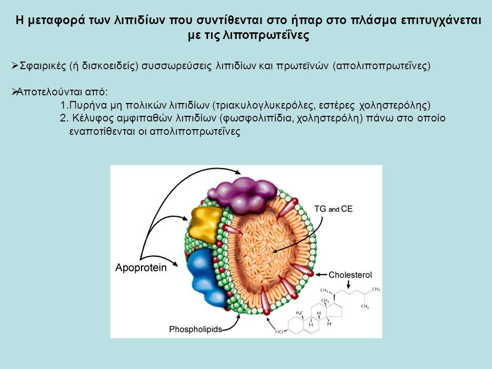  Σφαιρικές (ή δισκοειδείς) συσσωρεύσεις λιπιδίων και πρωτεϊνών (απολιποπρωτεΐνες)  Αποτελούνται από: 1.Πυρήνα μη πολικών λιπιδίων (τριακυλογλυκερόλες, εστέρες χοληστερόλης) 2.