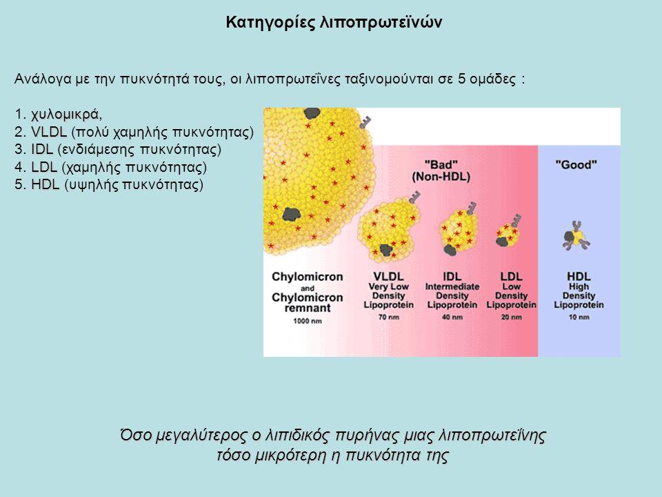 Ανάλογα με την πυκνότητά τους, οι λιποπρωτεΐνες ταξινομούνται σε 5 ομάδες : χυλομικρά 1.