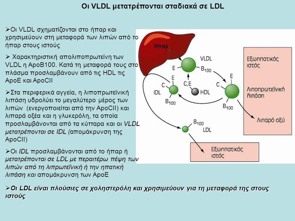 Οι VLDL μετατρέπονται σταδιακά σε LDL  Οι VLDL σχηματίζονται στο ήπαρ και χρησιμεύουν στη μεταφορά των λιπών από το ήπαρ στους ιστούς  Χαρακτηριστική απολιποπρωτείνη των VLDL η ΑpoΒ100.