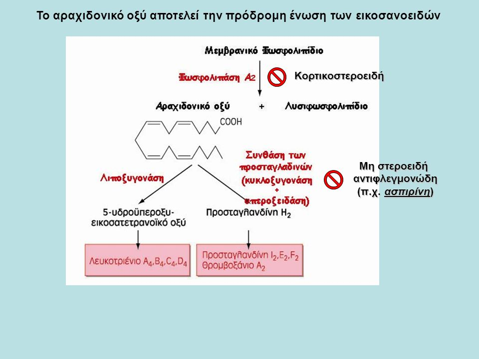  Σχηματίζονται από τη χοληστερόλη στο ήπαρ μέσω μιας σειράς αντιδράσεων που περιλαμβάνει: -αναγωγή του διπλού δεσμού της χοληστερόλης, -προσθήκη των 1 ή 2 –ΟΗ, - βράχυνση της υδρογονανθρακικής αλυσίδας, -οξείδωση του τελικού ατόμου C προς –COOH  Η εισαγωγή του -ΟΗ στη θέση 7 αποτελεί το ρυθμιστικό βήμα στη σύνθεση των χολικών οξέων Πρωτογενή χολικά οξέα