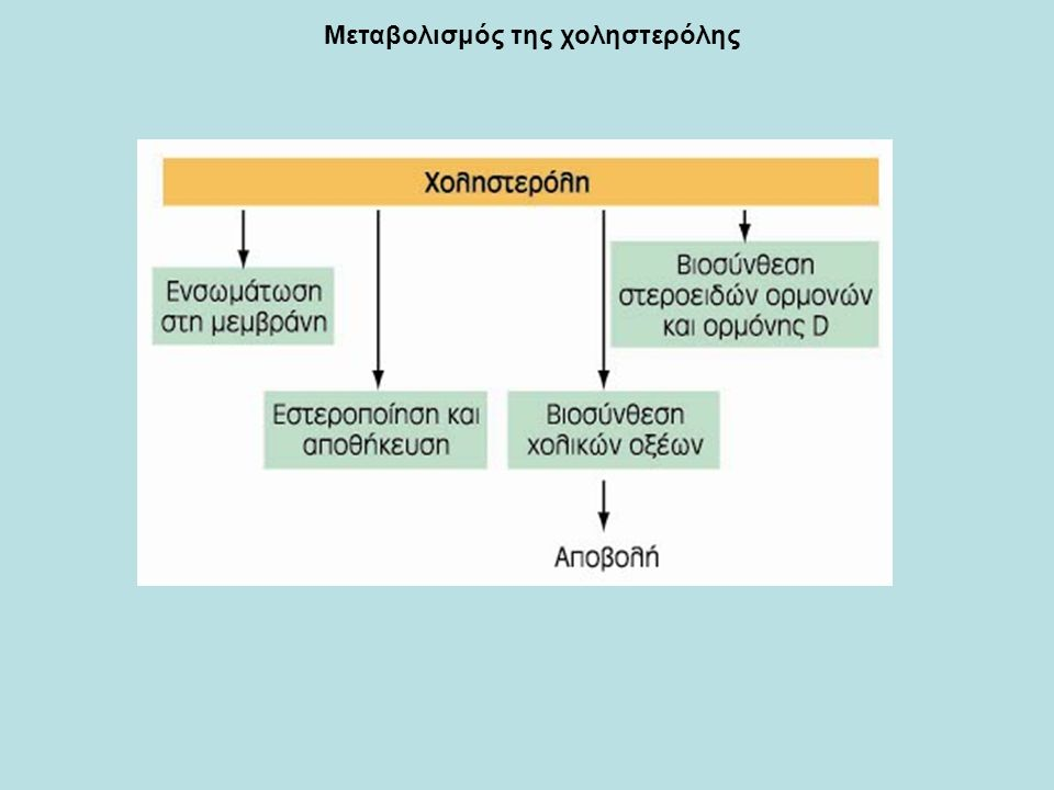 Στερόλες Δομικά λιπίδια ευκαρυωτικών κυττάρων Οι στερόλες έχουν τέσσερις συντηγμένους ανθρακικούς δακτυλίους (στεροειδής πυρήνας) και μια υδροξυλοομάδα Η χοληστερόλη, η κυριότερη στερόλη των ζώων, είναι δομικό συστατικό των μεμβρανών και πρόδρομη ένωση μιας μεγάλης ποικιλίας στεροειδών Χοληστερόλη