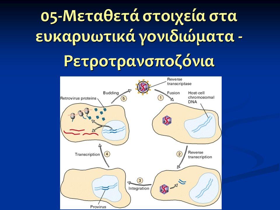 Ευκαρυωτικά μεταθετά στοιχεία Τάξη Ι: η μετάθεσή τους απαιτεί ενδιάμεσο μόριο RNA Τάξη Ι: η μετάθεσή τους απαιτεί ενδιάμεσο μόριο RNA Τάξη ΙΙ: η μετάθεσή τους απαιτεί μόνο DNA και ο μηχανισμός μοιάζει με τον μηχανισμό αποκοπής και επικόλλησης των προκαρυωτών Τάξη ΙΙ: η μετάθεσή τους απαιτεί μόνο DNA και ο μηχανισμός μοιάζει με τον μηχανισμό αποκοπής και επικόλλησης των προκαρυωτών