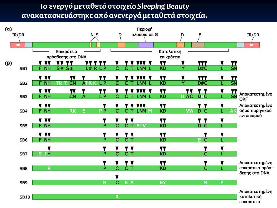 Το ενεργό μεταθετό στοιχείο Sleeping Beauty ανακατασκευάστηκε από ανενεργά μεταθετά στοιχεία. Consensus 12 μεταθετών από 8 είδη: μη λειτουργικό