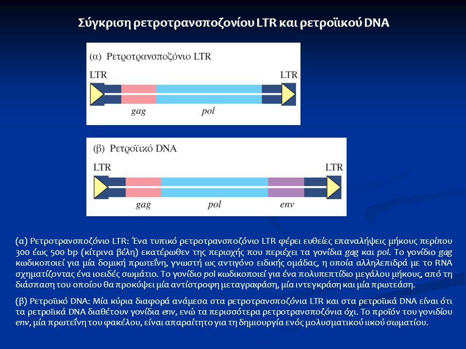 Σύγκριση ρετροτρανσποζονίου LTR και ρετροϊικού DNA (α) Ρετροτρανσποζόνιο LTR: Ένα τυπικό ρετροτρανσποζόνιο LTR φέρει ευθείες επαναλήψεις μήκους περίπο