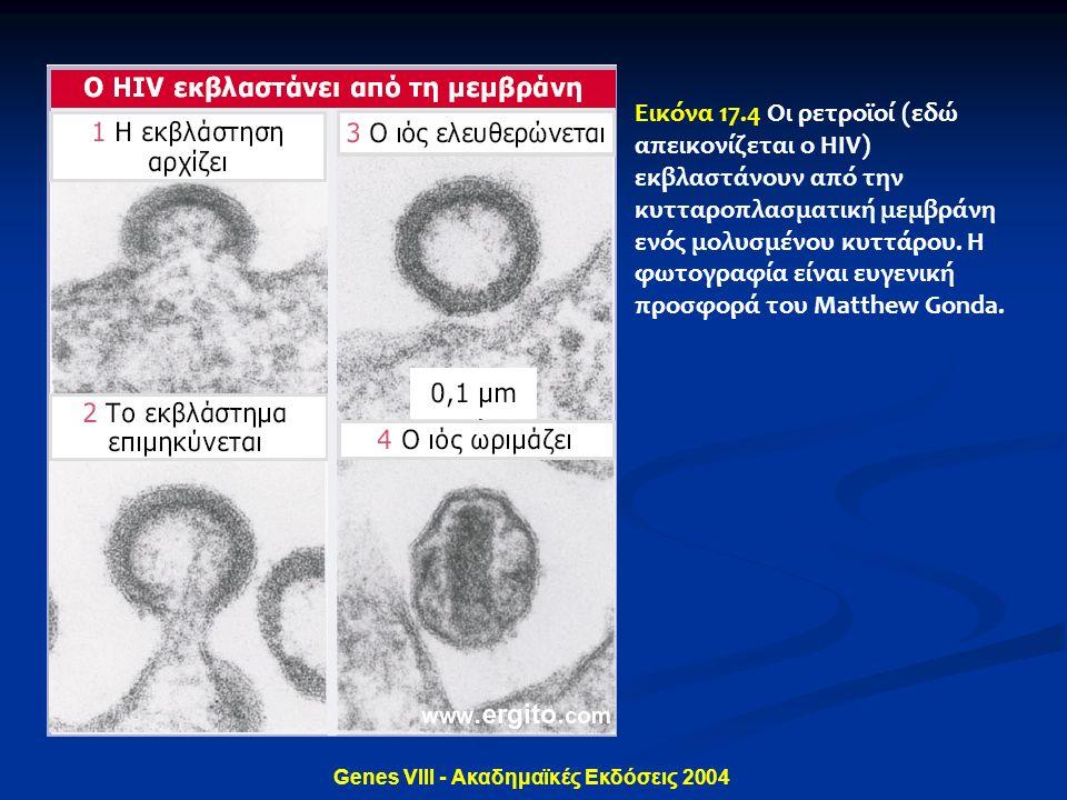 Genes VIII - Ακαδημαϊκές Εκδόσεις 2004 Εικόνα 17.4 Οι ρετροϊοί (εδώ απεικονίζεται ο HIV) εκβλαστάνουν από την κυτταροπλασματική μεμβράνη ενός μολυσμέν
