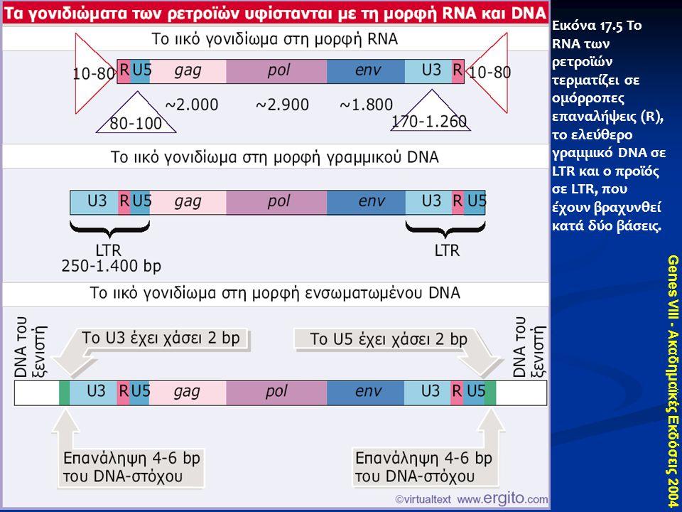 Genes VIII - Ακαδημαϊκές Εκδόσεις 2004 Εικόνα 17.5 Το RNA των ρετροϊών τερματίζει σε ομόρροπες επαναλήψεις (R), το ελεύθερο γραμμικό DNA σε LTR και ο