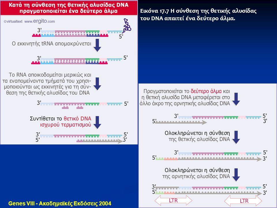 Genes VIII - Ακαδημαϊκές Εκδόσεις 2004 Εικόνα 17.7 Η σύνθεση της θετικής αλυσίδας του DNA απαιτεί ένα δεύτερο άλμα.