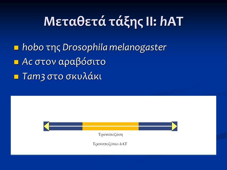 Μεταθετά τάξης ΙΙ: hAT hobo της Drosophila melanogaster hobo της Drosophila melanogaster Ac στον αραβόσιτο Ac στον αραβόσιτο Tam3 στο σκυλάκι Tam3 στο
