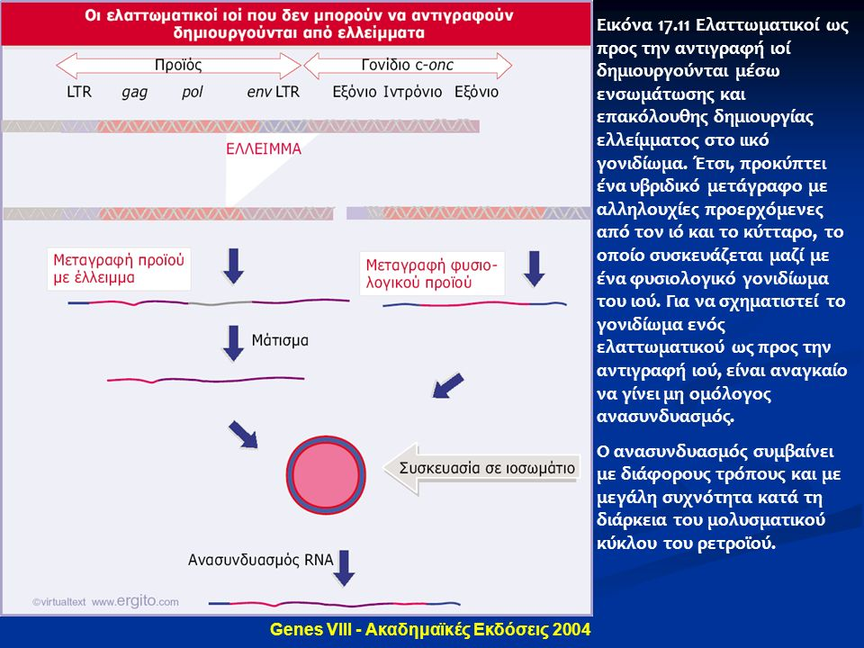 Genes VIII - Ακαδημαϊκές Εκδόσεις 2004 Εικόνα 17.11 Ελαττωματικοί ως προς την αντιγραφή ιοί δημιουργούνται μέσω ενσωμάτωσης και επακόλουθης δημιουργία