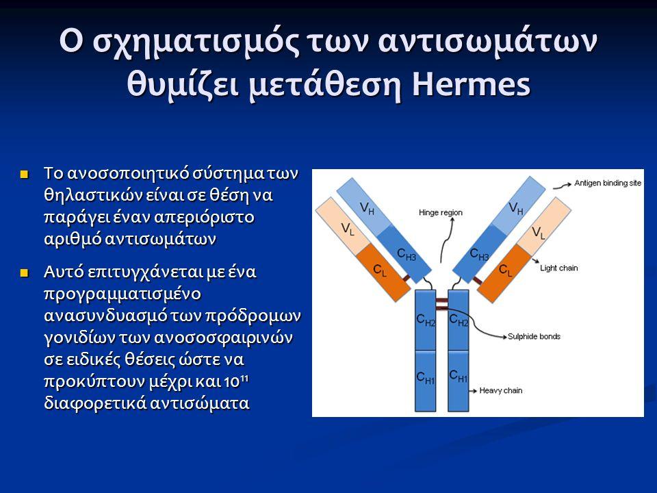 Οργάνωση και ανακατάταξη των V, D και J στο γονίδιο της βαριάς αλυσίδας των ανοσοσφαιρινών Οργάνωση και ανακατάταξη των V, D και J στο γονίδιο της βαριάς αλυσίδας των ανοσοσφαιρινών