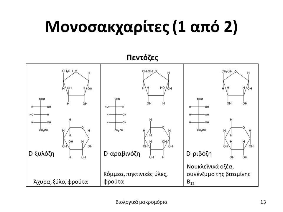 Μονοσακχαρίτες (1 από 2) Βιολογικά μακρομόρια13