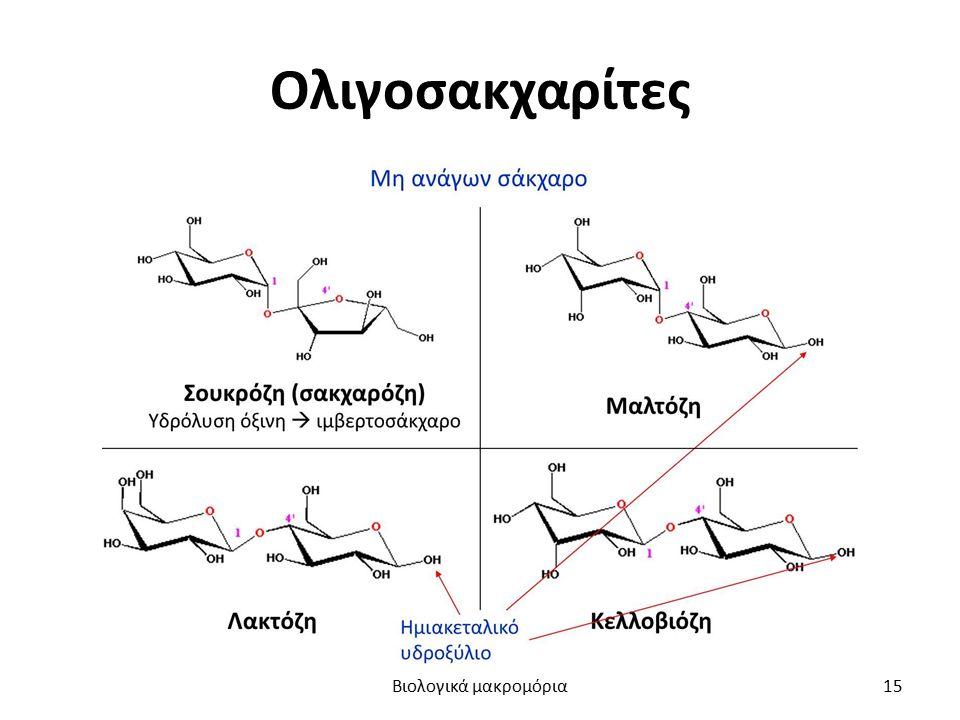 Ολιγοσακχαρίτες Βιολογικά μακρομόρια15