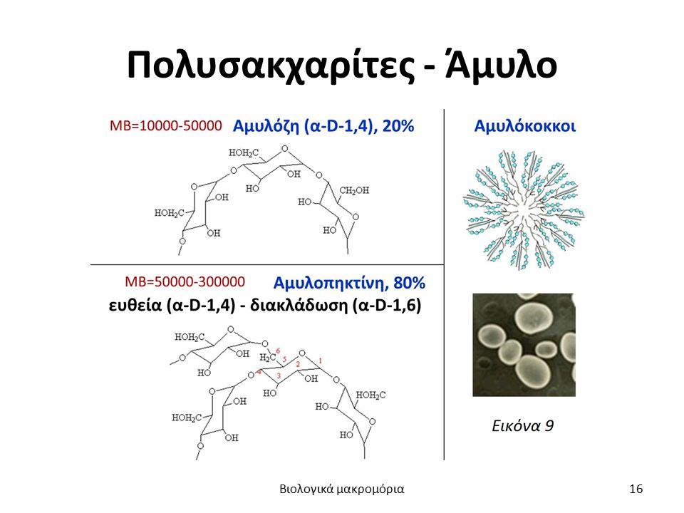 Πολυσακχαρίτες - Άμυλο Βιολογικά μακρομόρια16