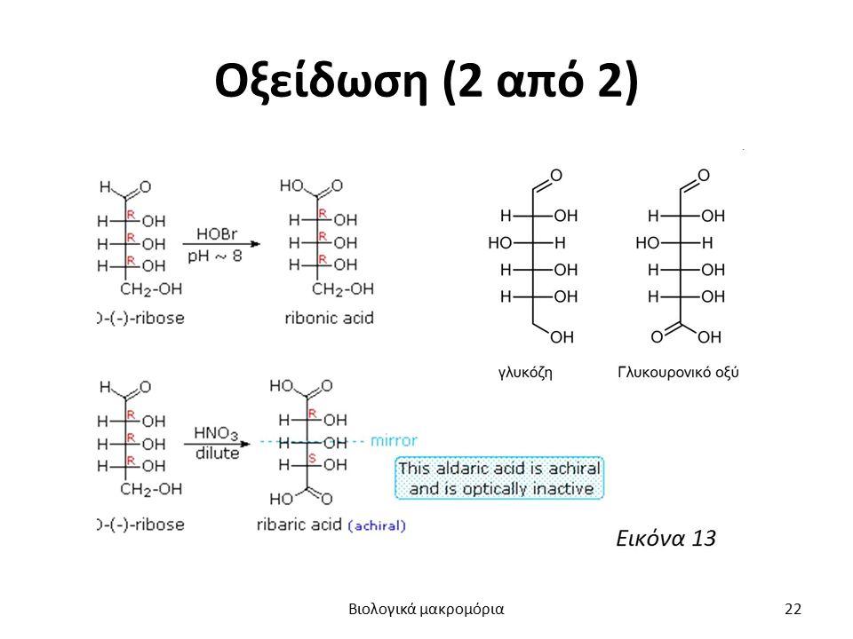 Οξείδωση (2 από 2) Βιολογικά μακρομόρια22