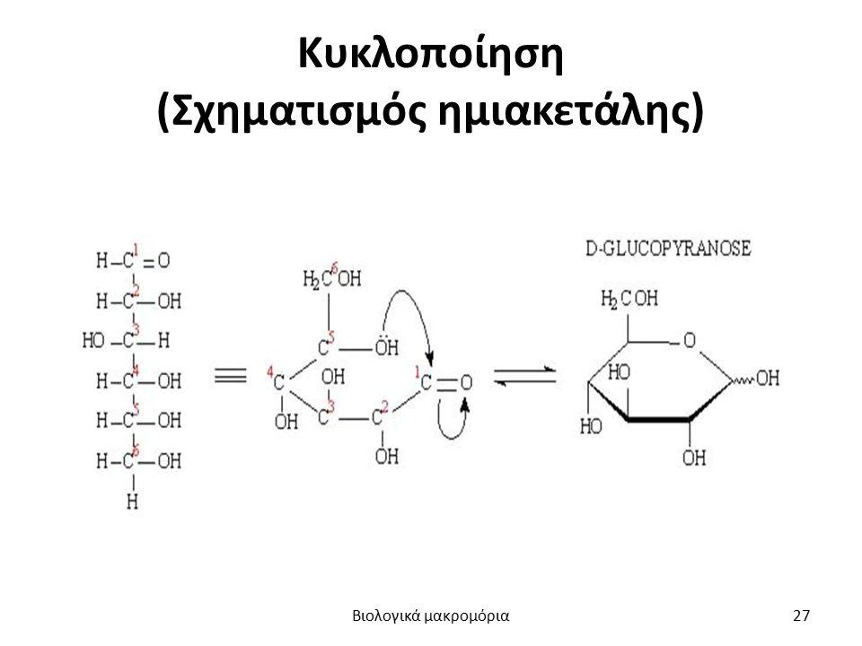 Κυκλοποίηση (Σχηματισμός ημιακετάλης) Βιολογικά μακρομόρια27