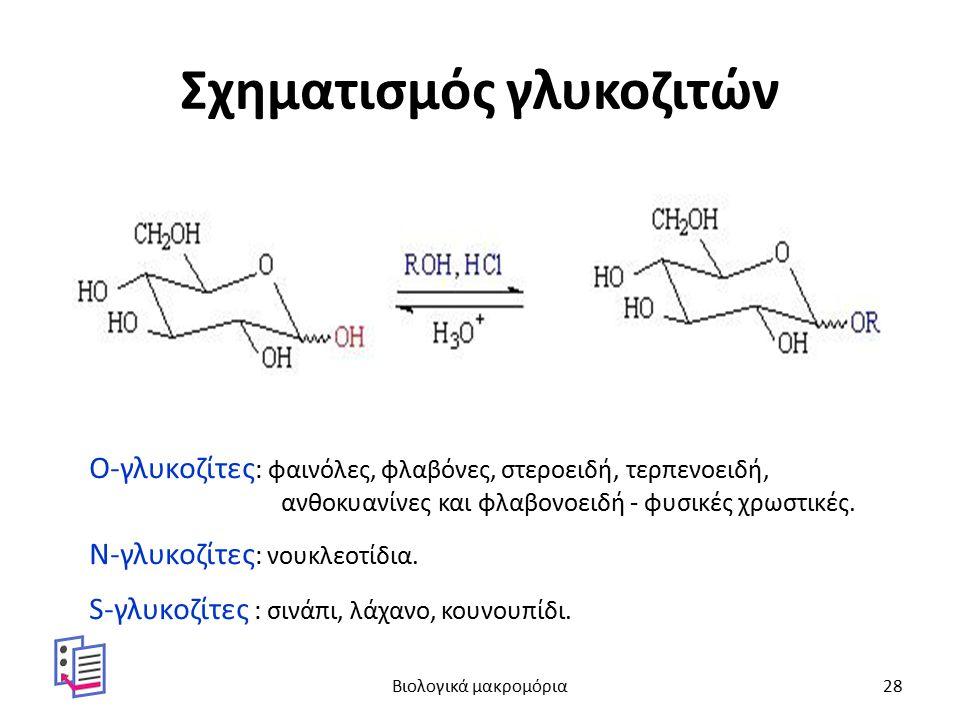 Σχηματισμός γλυκοζιτών Ο-γλυκοζίτες : φαινόλες, φλαβόνες, στεροειδή, τερπενοειδή, ανθοκυανίνες και φλαβονοειδή - φυσικές χρωστικές. Ν-γλυκοζίτες : νου