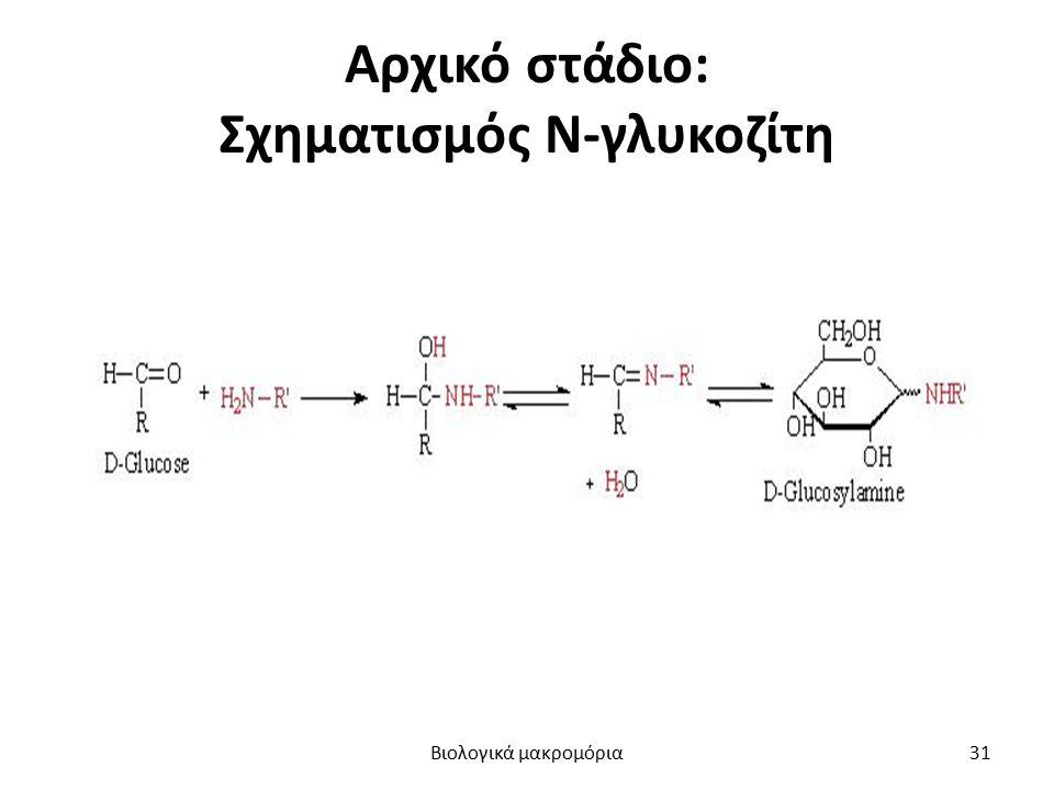 Αρχικό στάδιο: Σχηματισμός Ν-γλυκοζίτη Βιολογικά μακρομόρια31