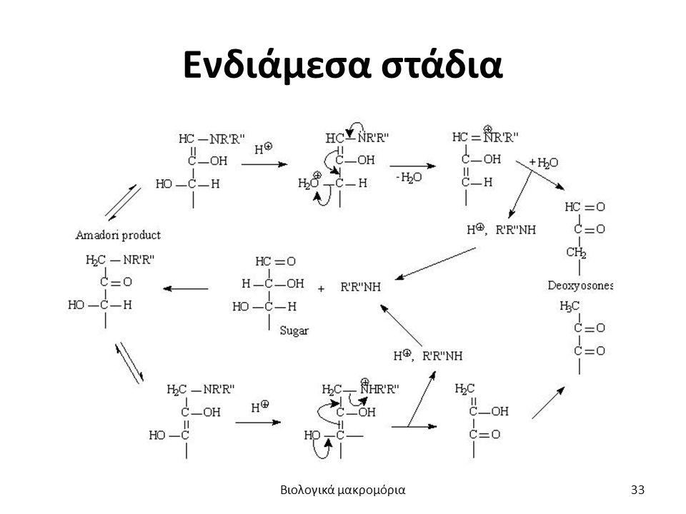 Ενδιάμεσα στάδια Βιολογικά μακρομόρια33