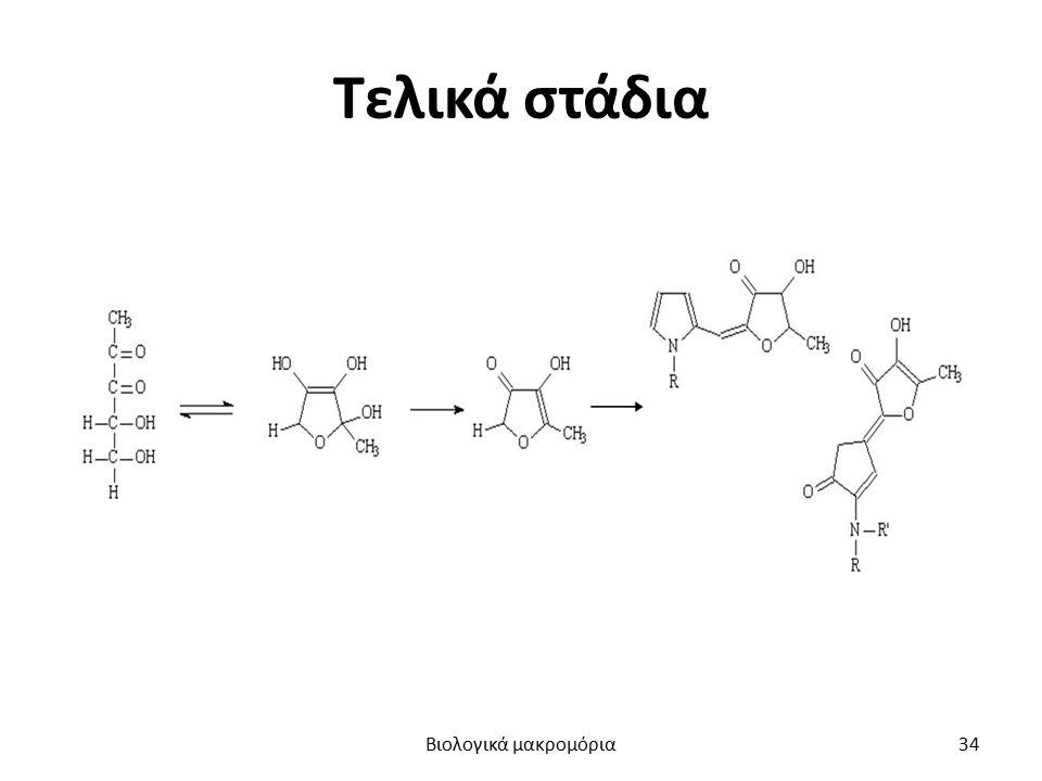 Τελικά στάδια Βιολογικά μακρομόρια34