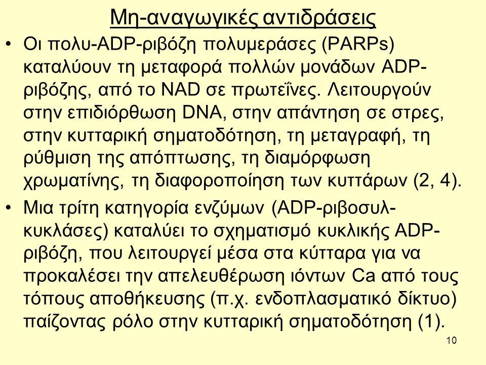 10 Μη-αναγωγικές αντιδράσεις Οι πολυ-ADP-ριβόζη πολυμεράσες (PARPs) καταλύουν τη μεταφορά πολλών μονάδων ADP- ριβόζης, από το NAD σε πρωτεΐνες.