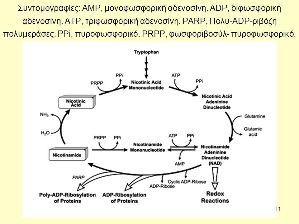 11 Συντομογραφίες: AMP, μονοφωσφορική αδενοσίνη. ADP, διφωσφορική αδενοσίνη.