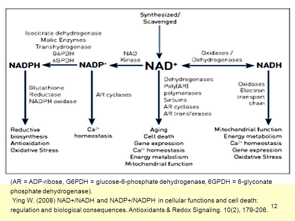 12 (AR = ADP-ribose, G6PDH = glucose-6-phosphate dehydrogenase, 6GPDH = 6-glyconate phosphate dehydrogenase).