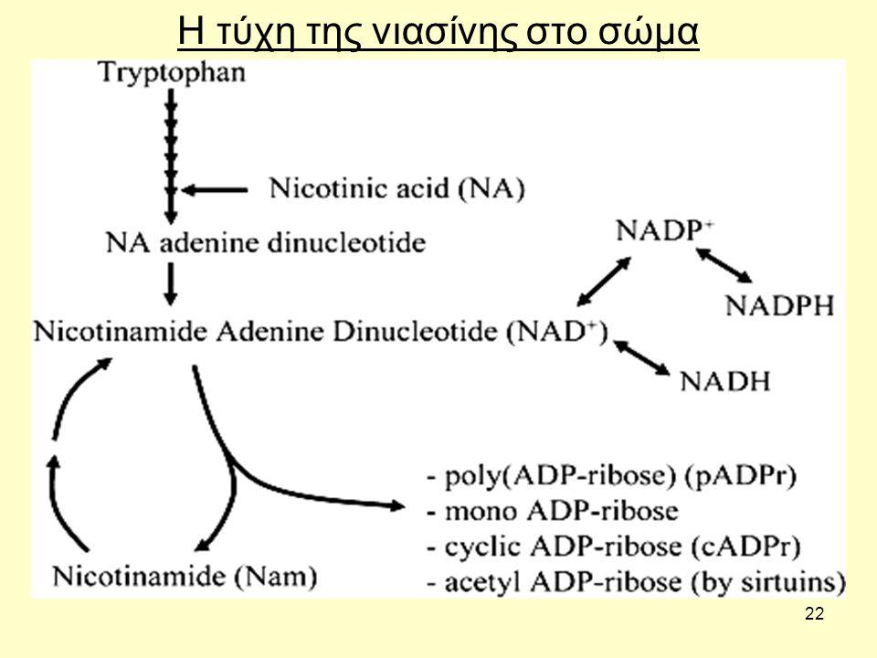 22 Η τύχη της νιασίνης στο σώμα