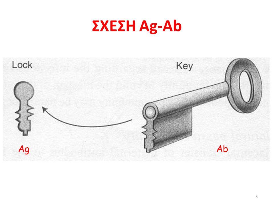 ΣΧΕΣΗ Ag-Ab 3 AgAb