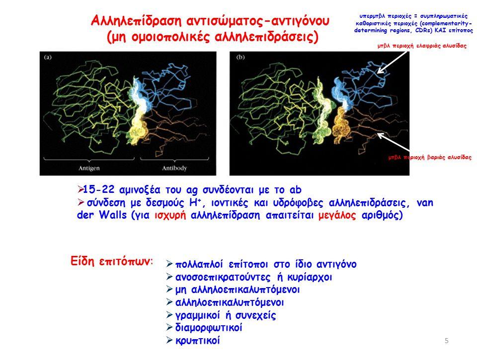  15-22 αμινοξέα του ag συνδέονται με το ab  σύνδεση με δεσμούς Η +, ιοντικές και υδρόφοβες αλληλεπιδράσεις, van der Walls (για ισχυρή αλληλεπίδραση απαιτείται μεγάλος αριθμός) Αλληλεπίδραση αντισώματος-αντιγόνου (μη ομοιοπολικές αλληλεπιδράσεις) υπερμτβλ περιοχές = συμπληρωματικές καθοριστικές περιοχές (complementarity- determining regions, CDRs) ΚΑΙ επίτοπος μτβλ περιοχή ελαφριάς αλυσίδας μτβλ περιοχή βαριάς αλυσίδας Είδη επιτόπων:  πολλαπλοί επίτοποι στο ίδιο αντιγόνο  ανοσοεπικρατούντες ή κυρίαρχοι  μη αλληλοεπικαλυπτόμενοι  αλληλοεπικαλυπτόμενοι  γραμμικοί ή συνεχείς  διαμορφωτικοί  κρυπτικοί 5