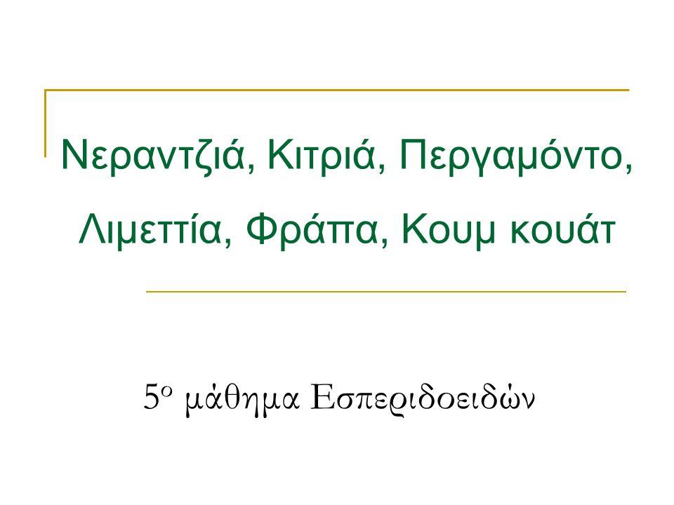 5 ο μάθημα Εσπεριδοειδών Νεραντζιά, Κιτριά, Περγαμόντο, Λιμεττία, Φράπα, Κουμ κουάτ