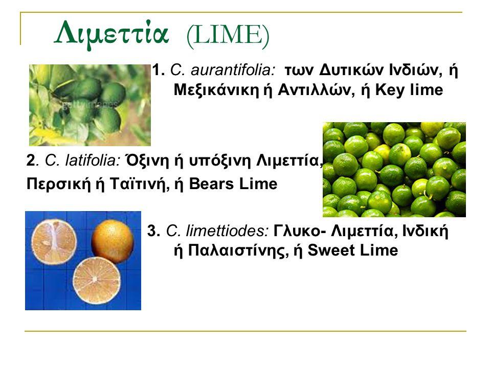 1. C. aurantifolia: των Δυτικών Ινδιών, ή Μεξικάνικη ή Αντιλλών, ή Key lime 2. C. latifolia: Όξινη ή υπόξινη Λιμεττία, Περσική ή Ταϊτινή, ή Bears Lime