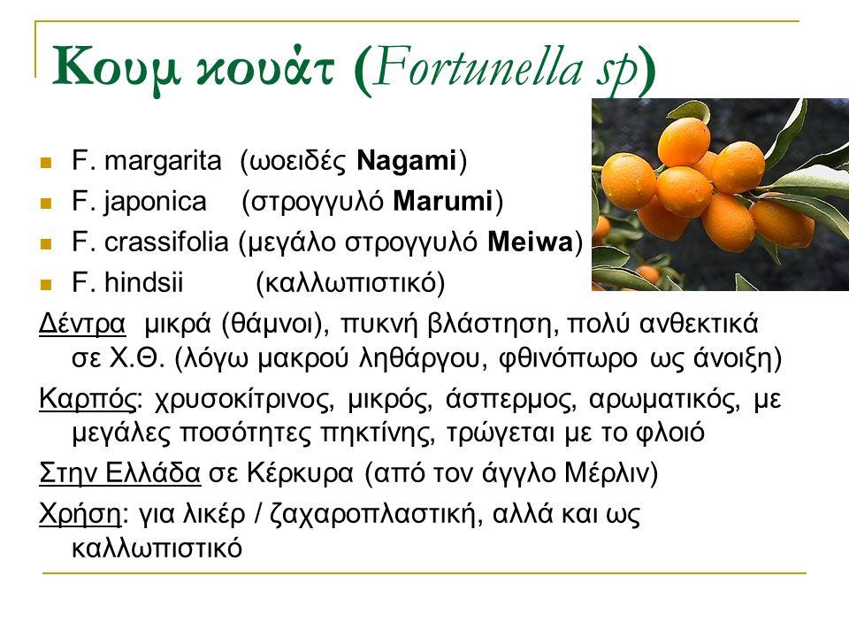 F. margarita (ωοειδές Νagami) F. japonica (στρογγυλό Marumi) F. crassifolia (μεγάλο στρογγυλό Meiwa) F. hindsii (καλλωπιστικό) Δέντρα μικρά (θάμνοι),
