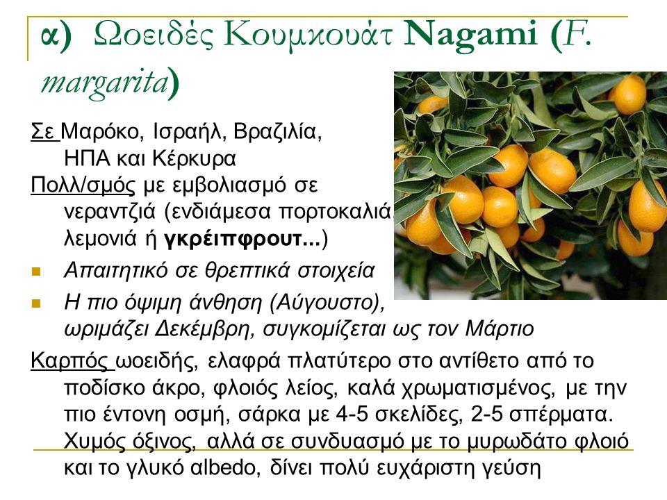 Σε Μαρόκο, Ισραήλ, Βραζιλία, ΗΠΑ και Κέρκυρα Πολλ/σμός με εμβολιασμό σε νεραντζιά (ενδιάμεσα πορτοκαλιά, λεμονιά ή γκρέιπφρουτ...) Απαιτητικό σε θρεπτ
