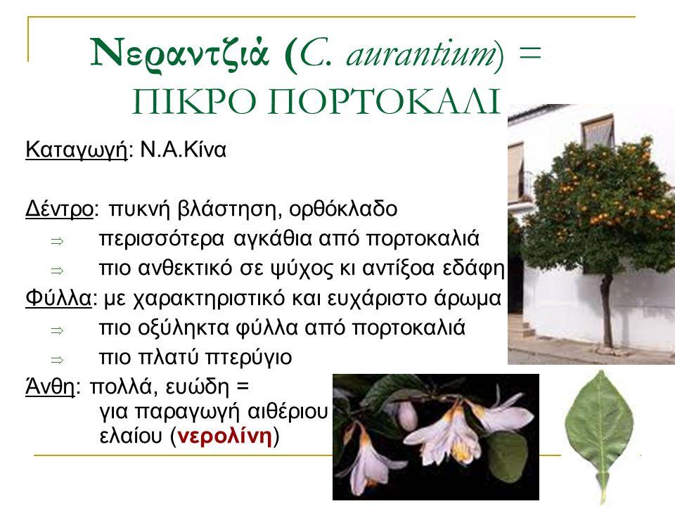 Καταγωγή: Ν.Α.Κίνα Δέντρο: πυκνή βλάστηση, ορθόκλαδο  περισσότερα αγκάθια από πορτοκαλιά  πιο ανθεκτικό σε ψύχος κι αντίξοα εδάφη Φύλλα: με χαρακτηρ