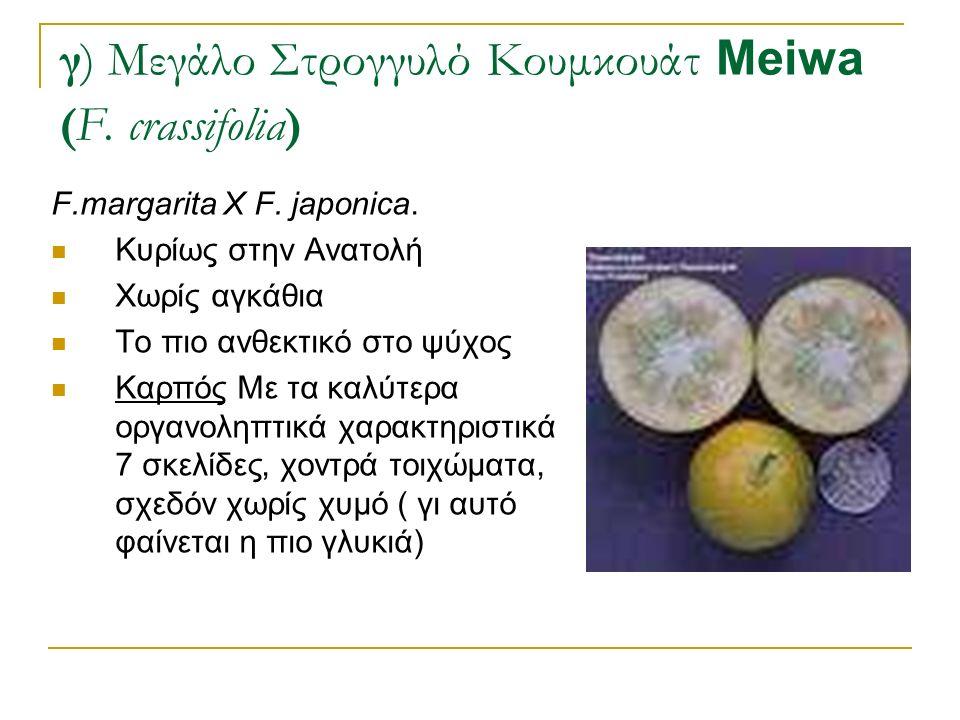 F.margarita X F. japonica. Κυρίως στην Ανατολή Χωρίς αγκάθια Το πιο ανθεκτικό στο ψύχος Καρπός Με τα καλύτερα οργανοληπτικά χαρακτηριστικά 7 σκελίδες,